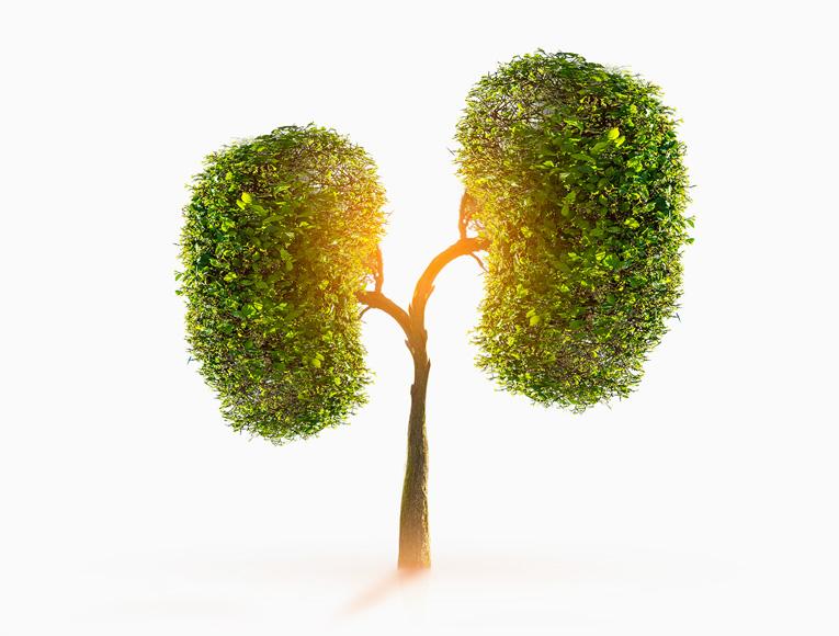 Kidney Health
