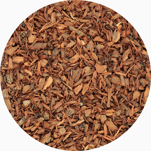African Pygeum bark